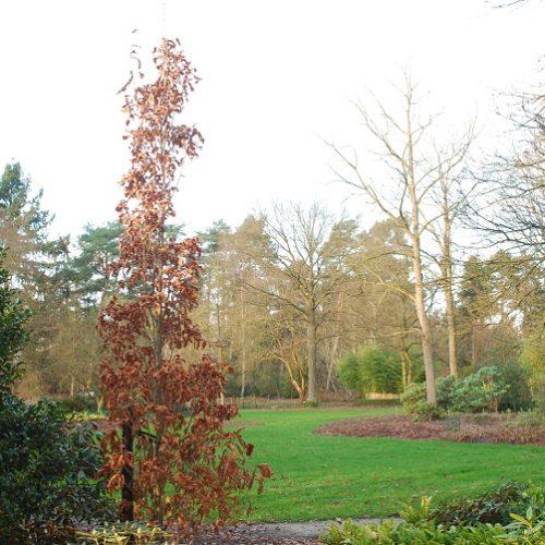 Bokrijk Arboretum