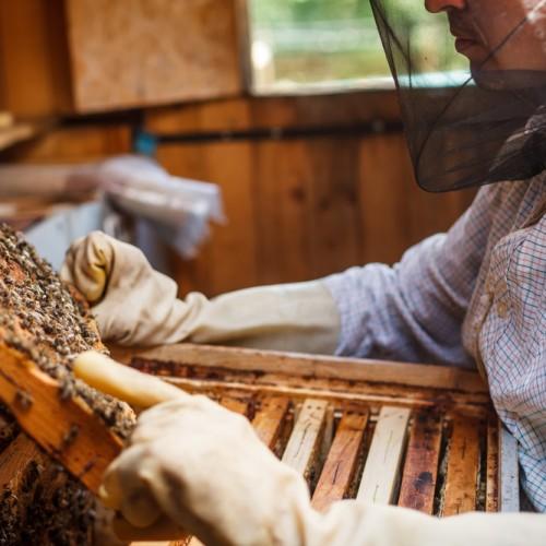 bijen kweken bokrijk