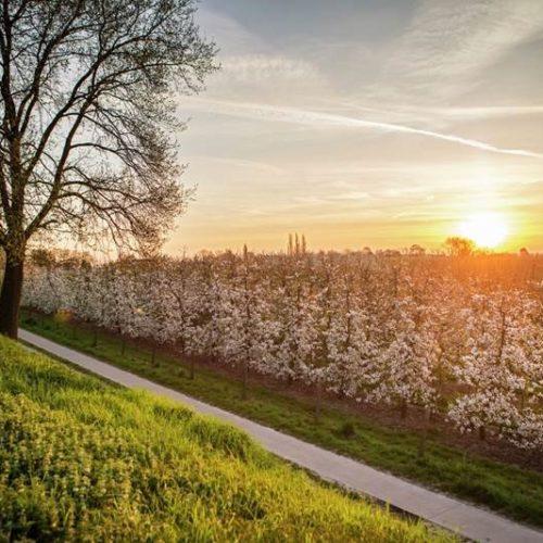 Toerisme in Limburg bloesems